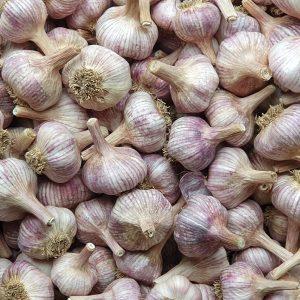 Loose garlic bulbs