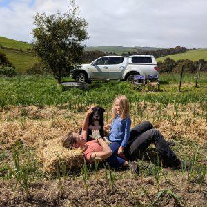 Garlic crop 2018 mulching 2